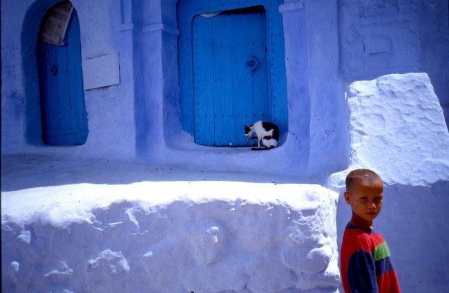 Les Chats De Santorin Enfant10