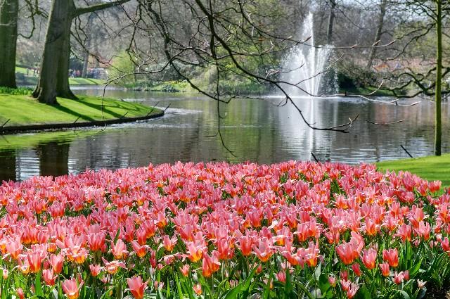 Frühlingsträume Keu_0927