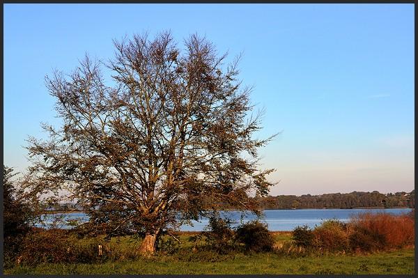 Fotoprojekt - Bäume - Seite 9 Baumha11