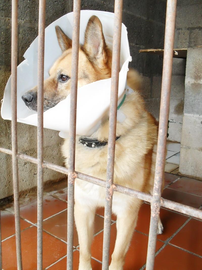 [URGENT AVANT EUTHA] Le refuge affiche complet - 4 chiens vous attendent ! (Picardie) - Page 2 Sdc16714