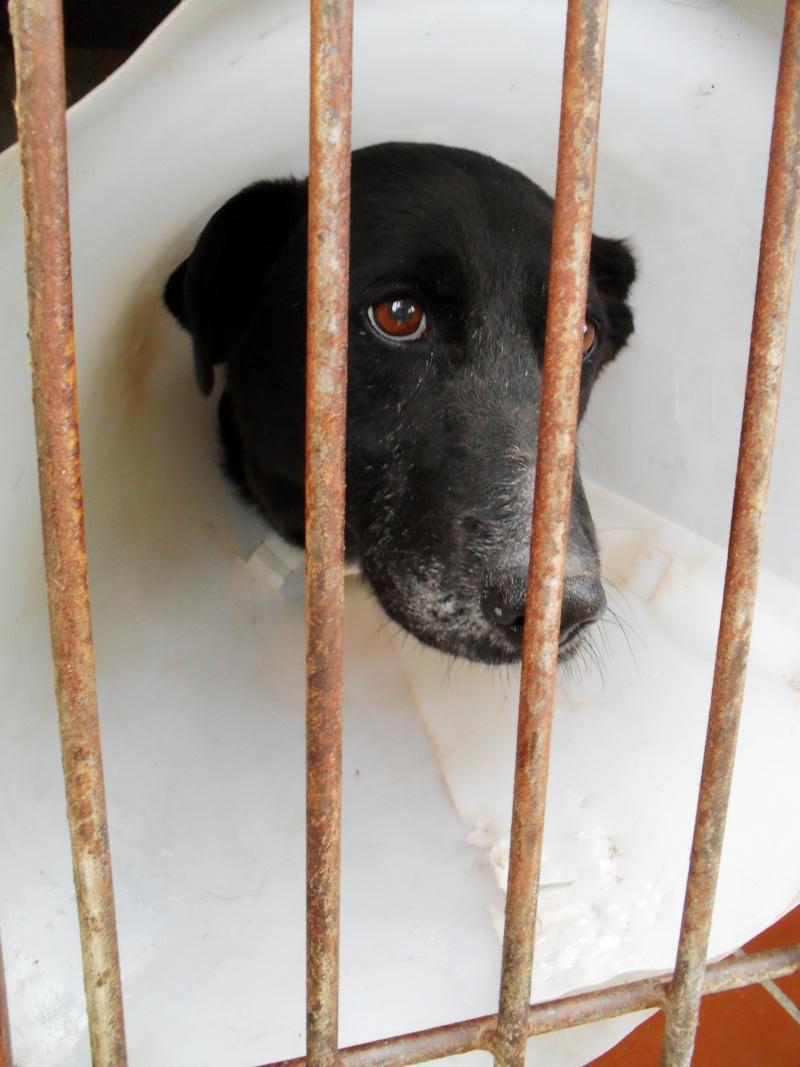 [URGENT AVANT EUTHA] Le refuge affiche complet - 4 chiens vous attendent ! (Picardie) - Page 2 Sdc16717