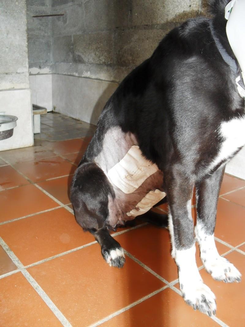 [URGENT AVANT EUTHA] Le refuge affiche complet - 4 chiens vous attendent ! (Picardie) - Page 2 Sdc16718