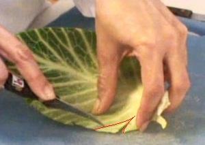 Cách tỉa lá bắp cải đẹp mà không khó 12031517