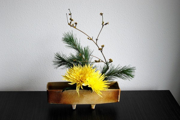 5 cách cắm hoa cúc đơn giản nghệ thuật 12060525