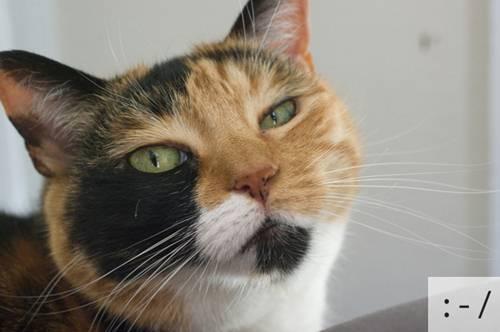Những chú mèo biểu cảm 41882a10