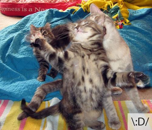 Những chú mèo biểu cảm 4f761610
