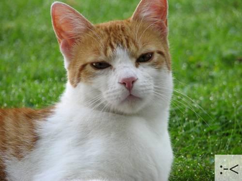 Những chú mèo biểu cảm 5848e910