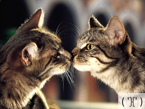 Những chú mèo biểu cảm 5cc1f410