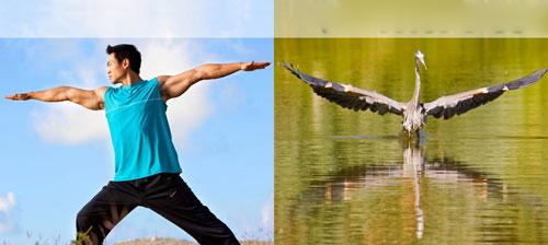 Ảnh vui: Luyện tập thể thao, tăng cường sức khỏe 6fd71210