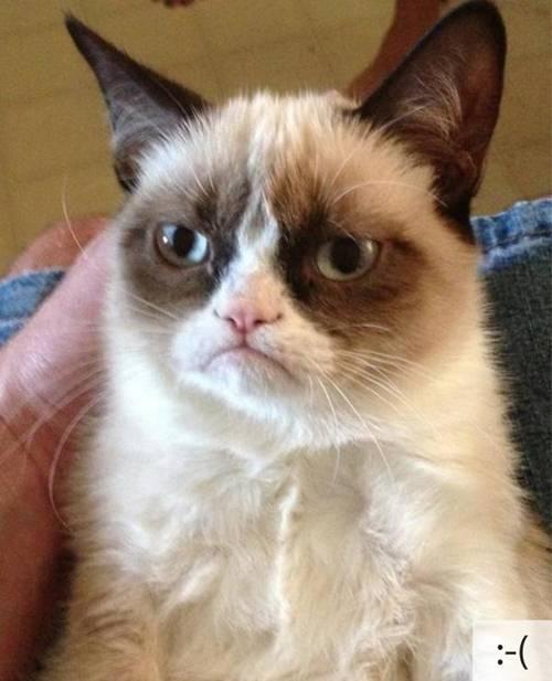 Những chú mèo biểu cảm 93629f10