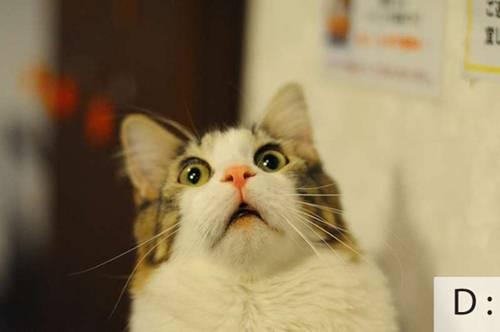 Những chú mèo biểu cảm 97290f10