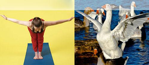 Ảnh vui: Luyện tập thể thao, tăng cường sức khỏe Ac133d10