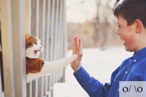 Những chú mèo biểu cảm Ba607a10