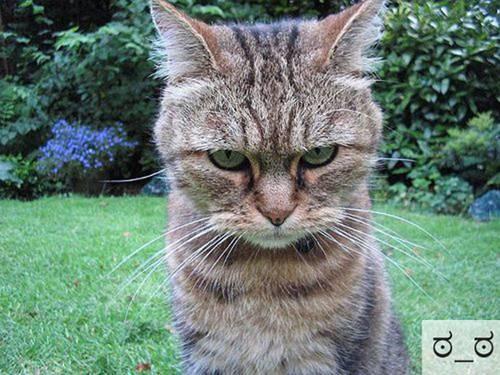 Những chú mèo biểu cảm C09d3810