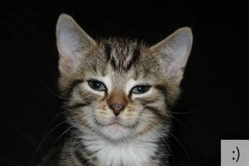 Những chú mèo biểu cảm C5800a10
