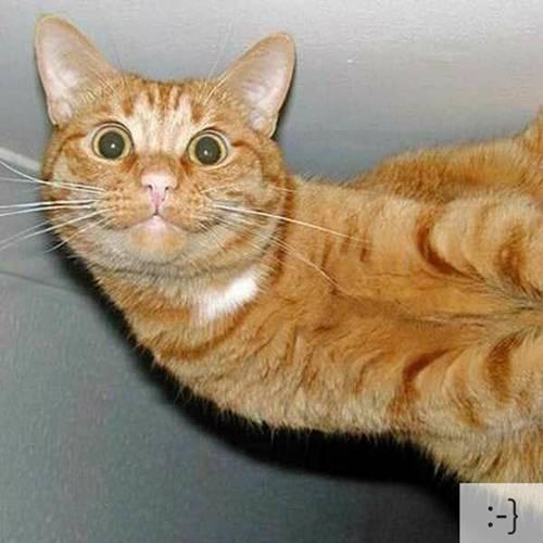 Những chú mèo biểu cảm D2e4c810