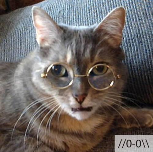 Những chú mèo biểu cảm Dadaa910