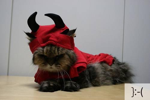 Những chú mèo biểu cảm E6e92110