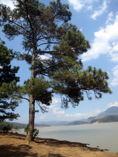 Hồ Đà Lạt Hoabtt33