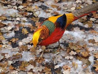 معلومات رائعه عن طائر الفزن 20101211