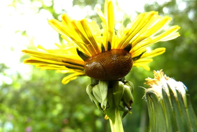 La loche et la fleur jaune La_loc11