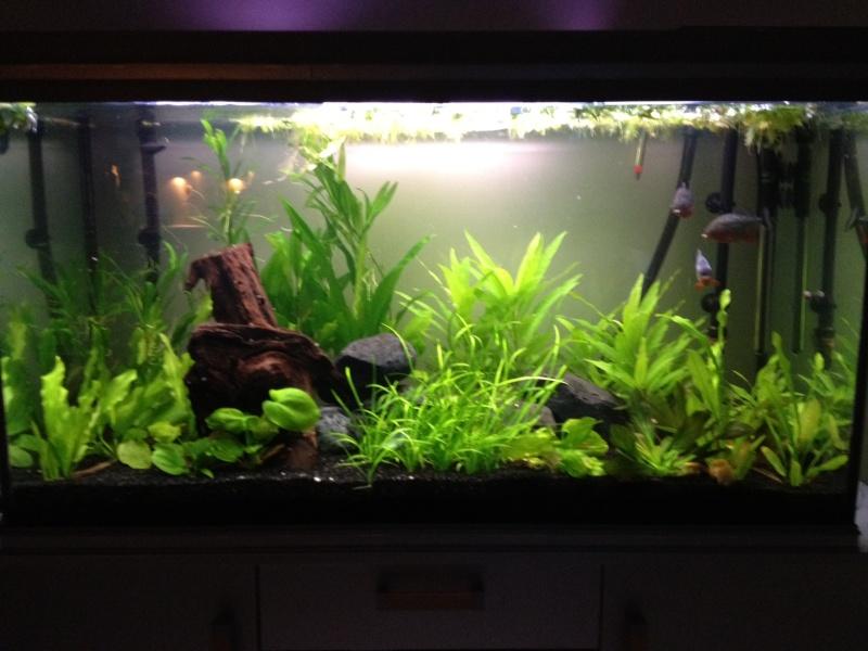 aquarium 360L brut piranhas Aquari11