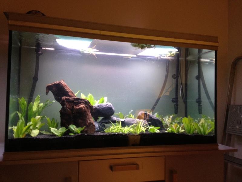 aquarium 360L brut piranhas Photo11