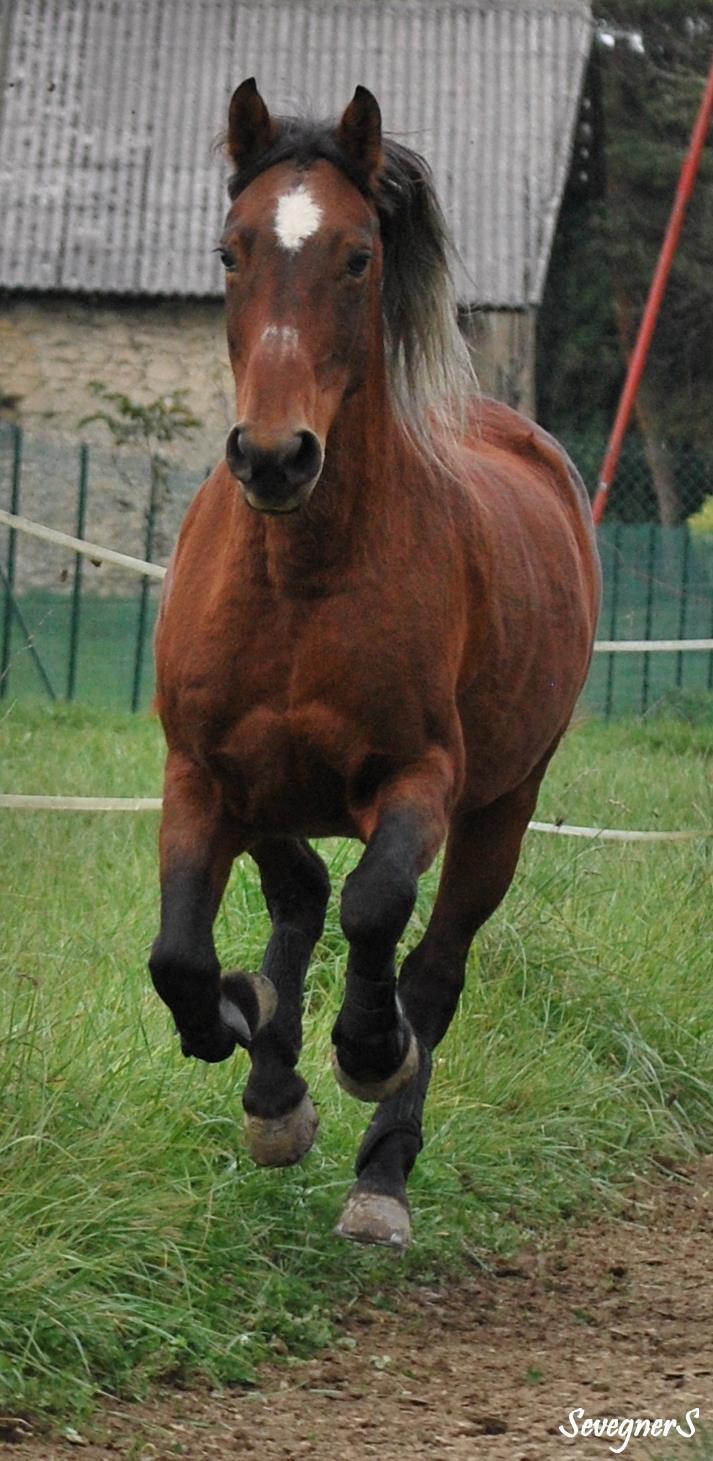 "Concours : ""cheval au galop"" GAGNANTE : TItâne 28706310"