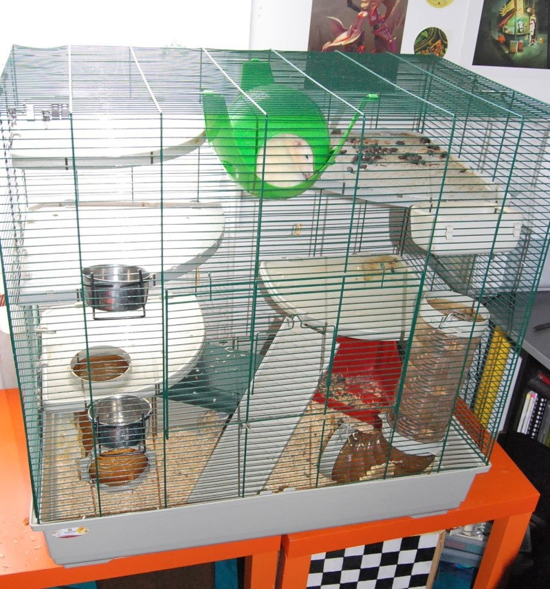 Vend cage Marchioro + accessoires Dsc_0111