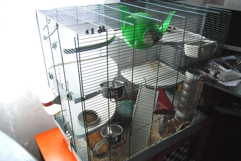 Vend cage Marchioro + accessoires Dsc_0112