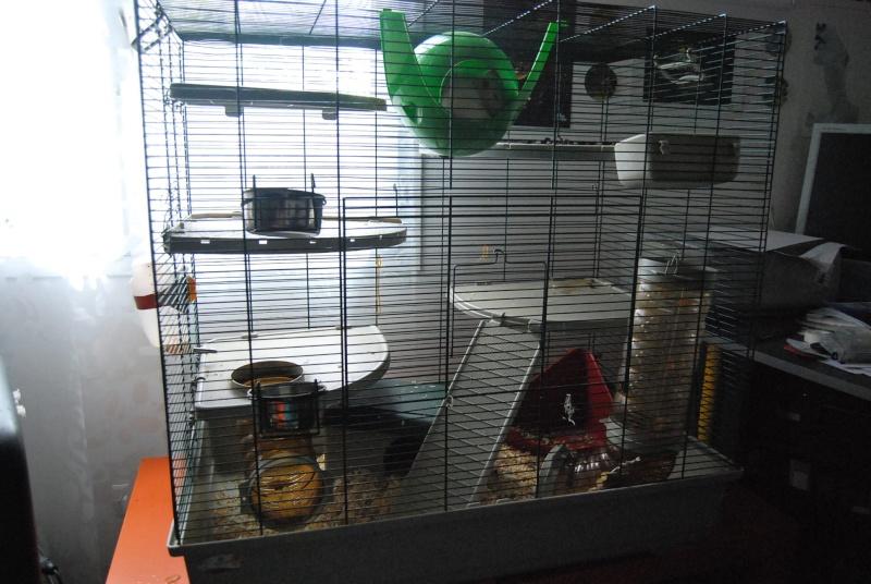 Vend cage Marchioro + accessoires Dsc_0113