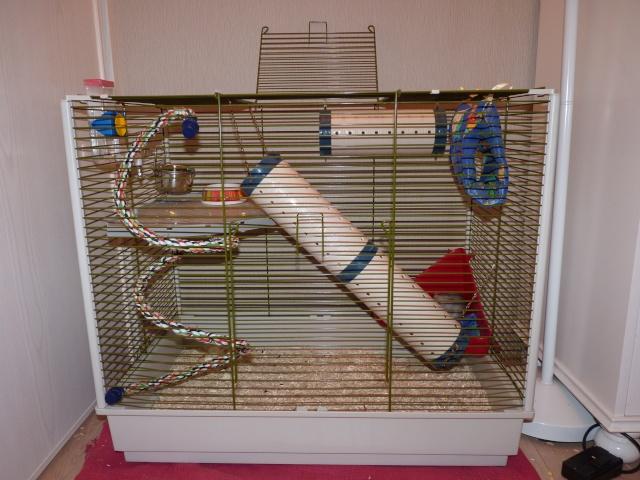 Grande cage pour ratoux à vendre dans le 78120 P1020317