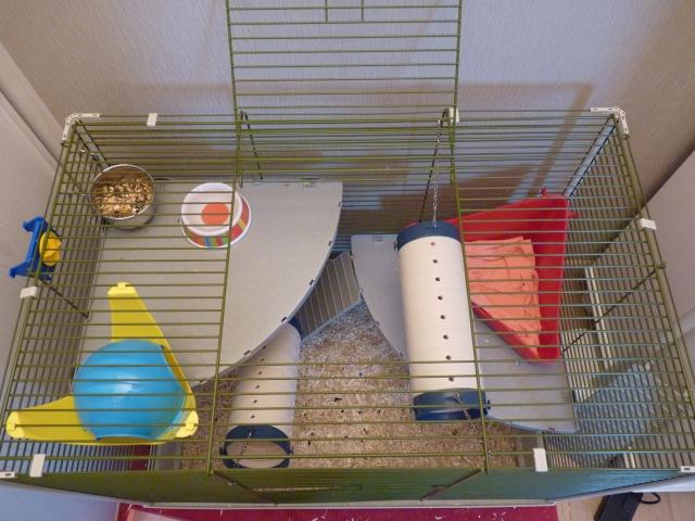 Grande cage pour ratoux à vendre dans le 78120 P1020318