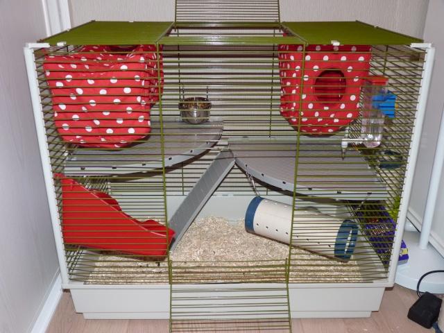 Grande cage pour ratoux à vendre dans le 78120 P1020411