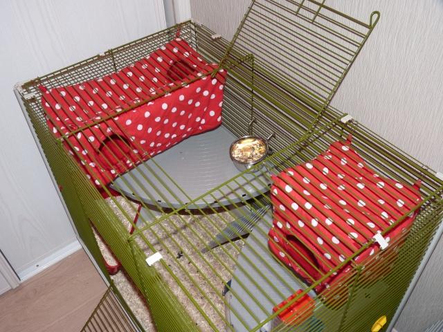 Grande cage pour ratoux à vendre dans le 78120 P1020412