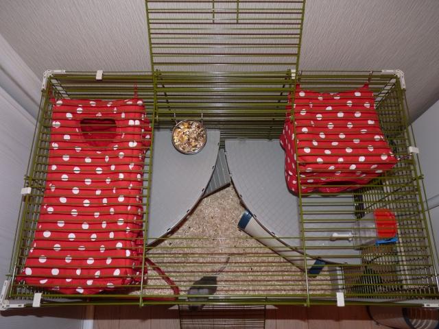 Grande cage pour ratoux à vendre dans le 78120 P1020413