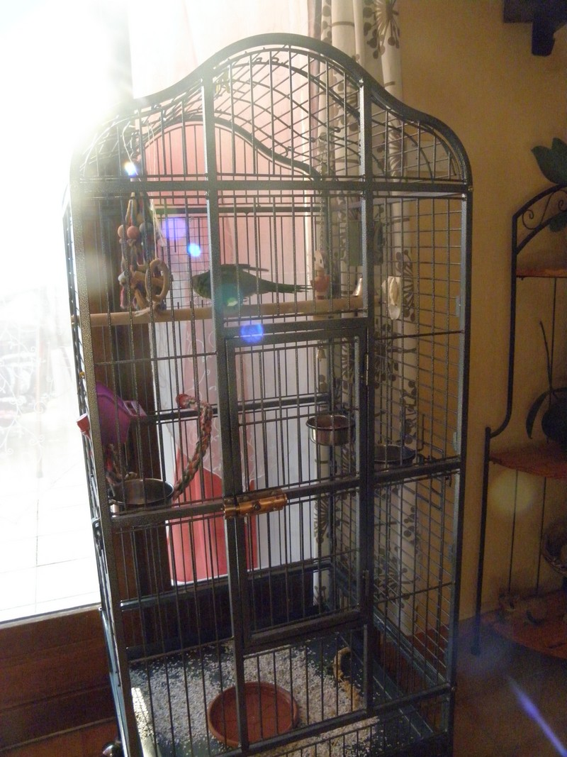 Une nouvelle cage! P8230014
