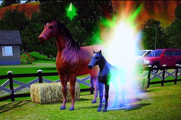 Les Sims™ 3 : Animaux et Cie - Page 6 Poulai10