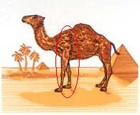 Les Logos qui nous cachent des choses. Quand le subliminal se mêle à la pub... Camel_10