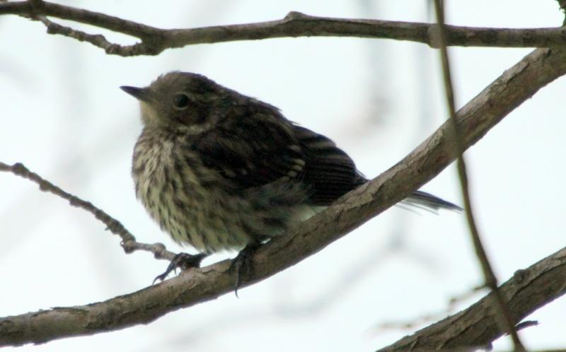 Deux oiseaux à identifier SVP Img_0216