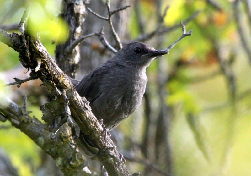 Deux oiseaux à identifier SVP Img_0310