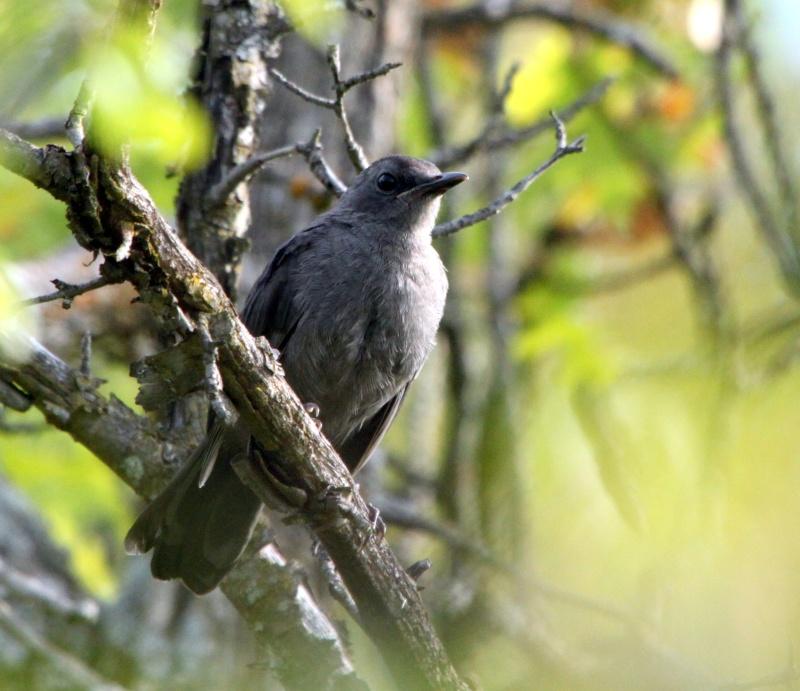 Deux oiseaux à identifier SVP Img_0311