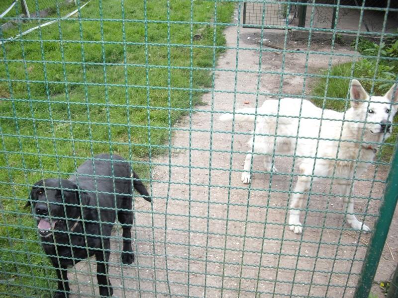 La ferme à Mirodin le Légendaire Imgp1114
