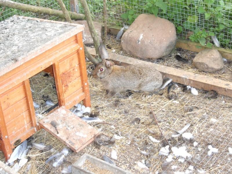La ferme à Mirodin le Légendaire Imgp1122