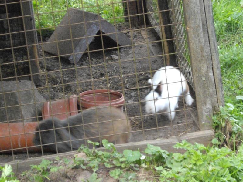 La ferme à Mirodin le Légendaire Imgp1123