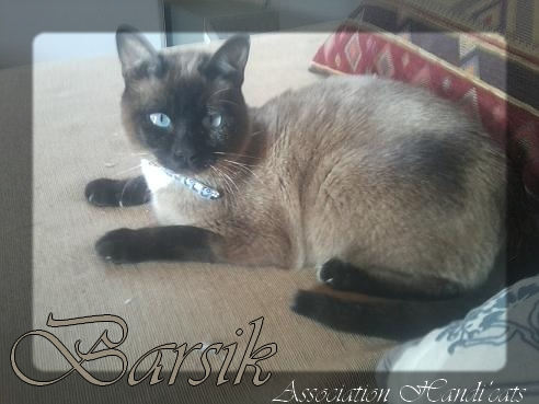 Pour Barsik : Prêt pour l'adoption ! Barsik10