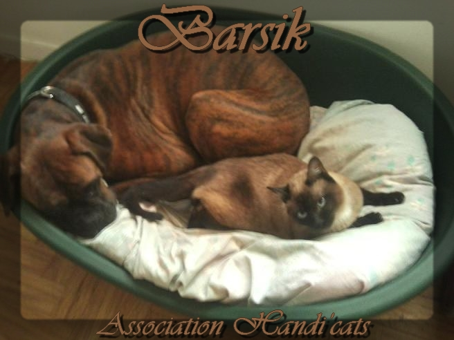 Pour Barsik : Prêt pour l'adoption ! Barsik11