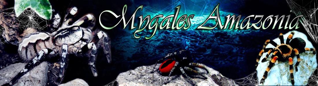 Mygales-Amazonia