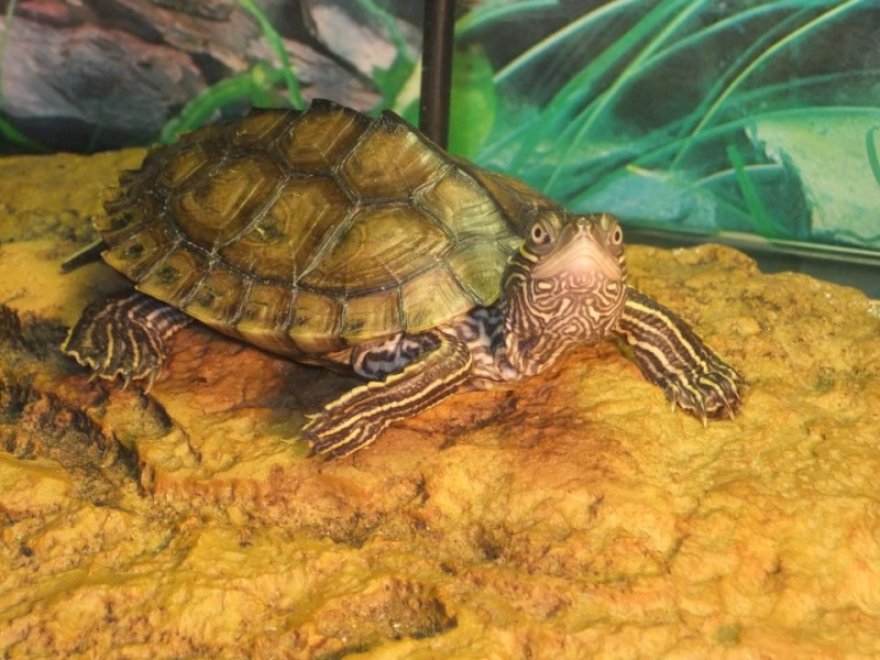 Mes tortues (Marjorie) - Page 2 32024410