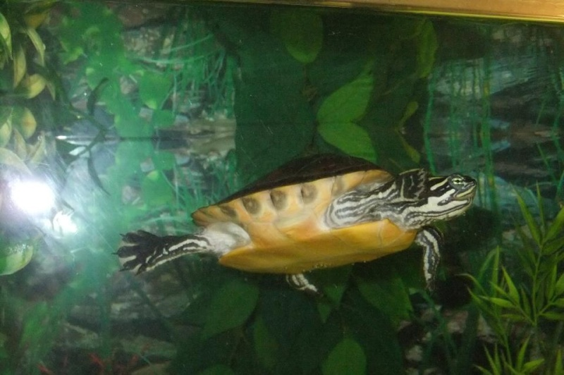 Mes tortues (Marjorie) - Page 2 32024413